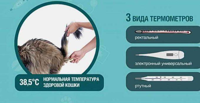 каким градусником измеряют температуру кошке